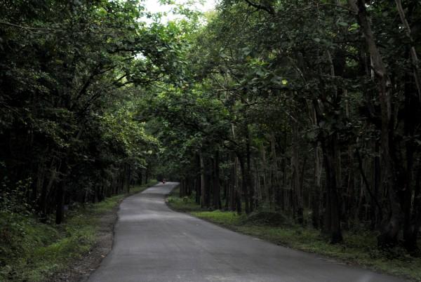 Goa Tourism – Goa Wildlife Sanctuaries | Travelguru Blog